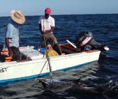 Fishers adapt to climate change by diversifying their strategies and gear for harvesting fish